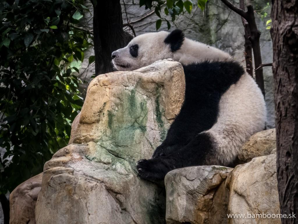 Pandí život. Môžme ho len závidieť